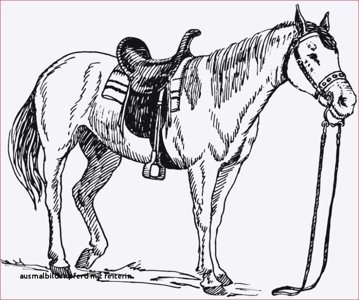 Ausmalbilder Pferde Mit Reiterin Neu Ausmalbilder Pferd Mit Reiterin Malvorlagen Pferde A4 Colorprint Fotos