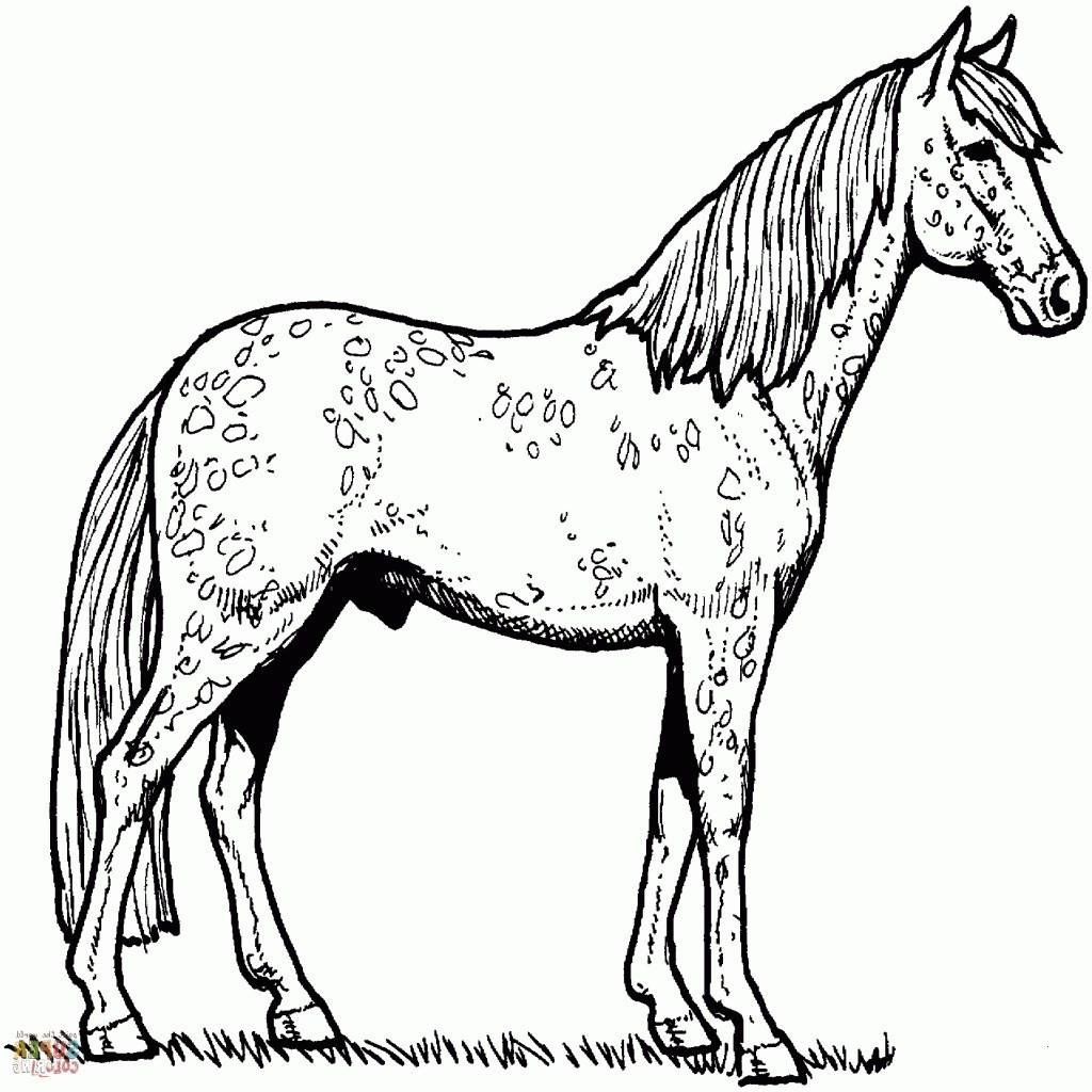 Ausmalbilder Pferde Turnier Einzigartig 30 Frisch ...