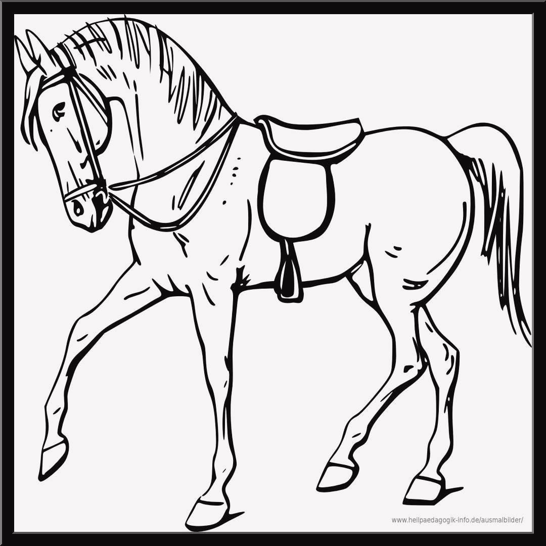 Ausmalbilder Pferde Turnier Genial 25 Genial Pferde Ausmalbild Zum Ausdrucken Das Bild
