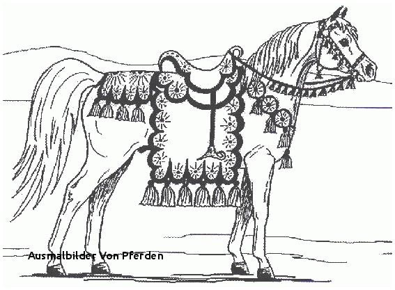 Ausmalbilder Pferde Turnier Neu Ausmalbilder Von Pferden Bayern Ausmalbilder Frisch Igel Grundschule Sammlung
