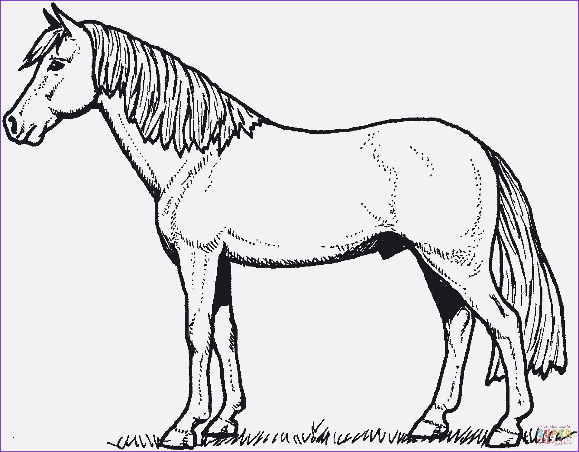 99 das beste von ausmalbilder pferde zum ausdrucken