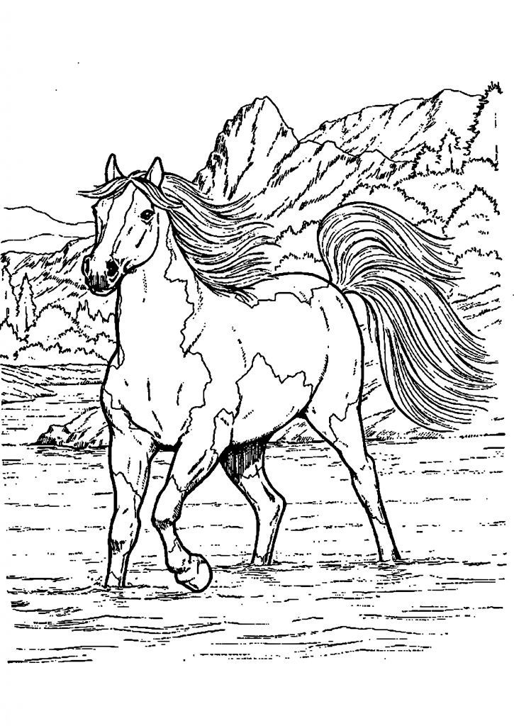 Ausmalbilder Pferde 37 Ausmalbilder Pferde Kostenlos Scoredatscore