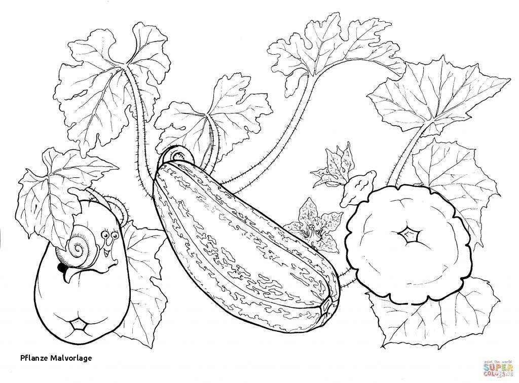 Ausmalbilder Pflanzen Gegen Zombies Frisch Pflanze Malvorlage Ausmalbild Speisekürbis Luxus Pflanzen Gegen Bilder