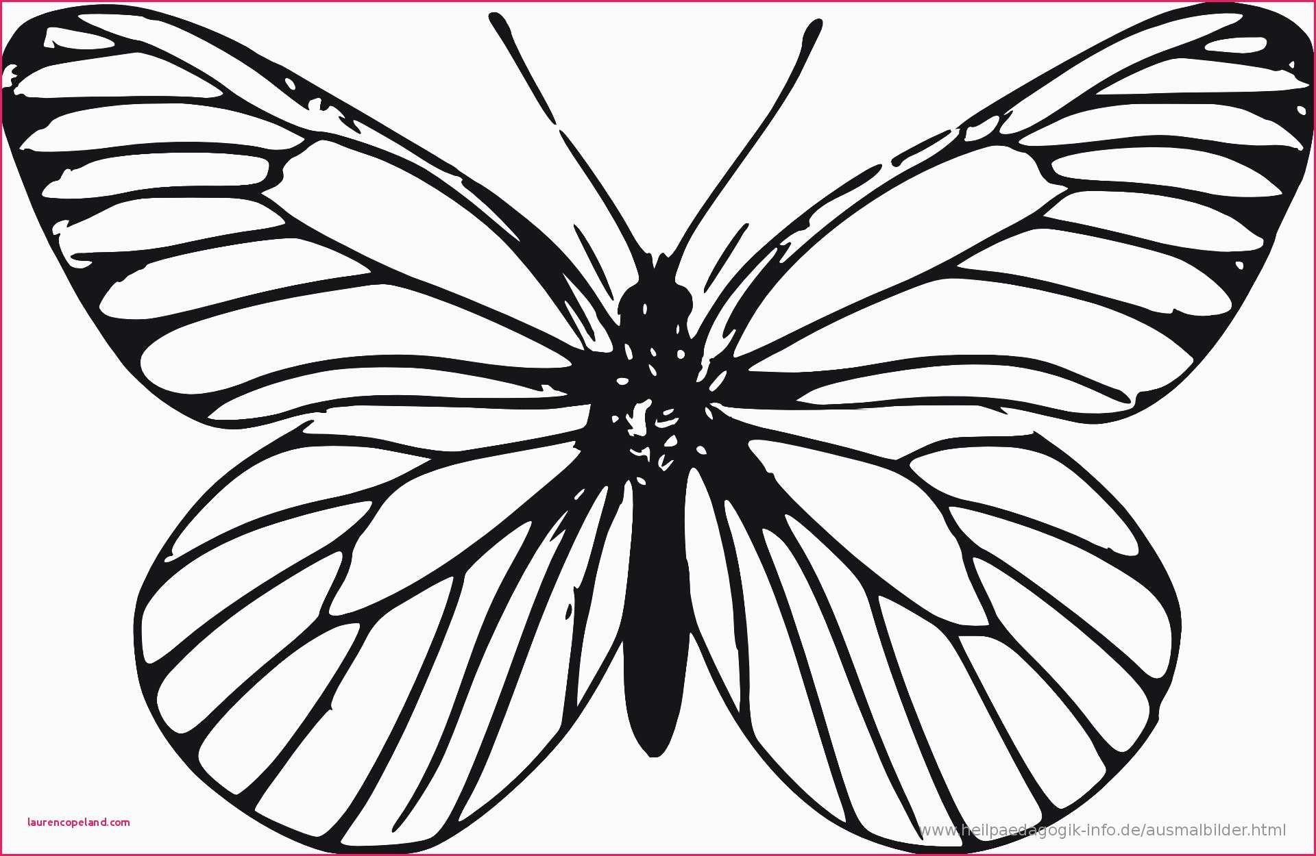 Ausmalbilder Schmetterling Mit Blume Das Beste Von Schmetterling Vorlage Zum Ausdrucken Schmetterling Ausmalbilder Zum Galerie