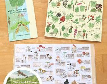 Ausmalbilder thema Wald Neu Wald Grundschule Material Bayern Ausmalbilder Schön Igel Grundschule Bilder