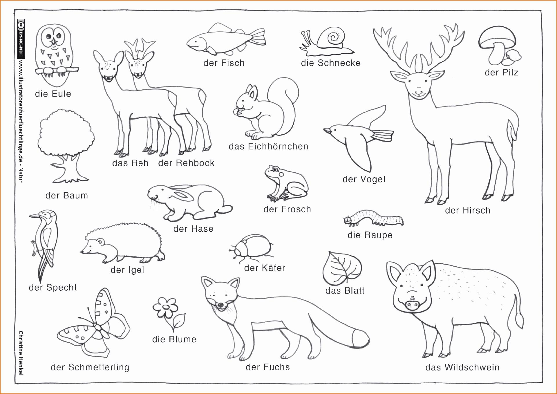 Ausmalbilder Tiere Im Wald Genial 30 Beitreibung Ausmalbilder Tiere Im Wald Fotos