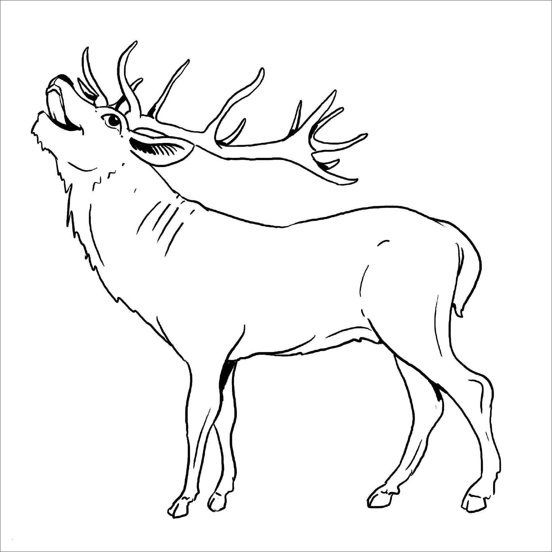 Ausmalbilder Tiere Im Wald Inspirierend Ausmalbild Tiere Im Wald Ich Liebe Dich Ausmalbilder Schön Bild