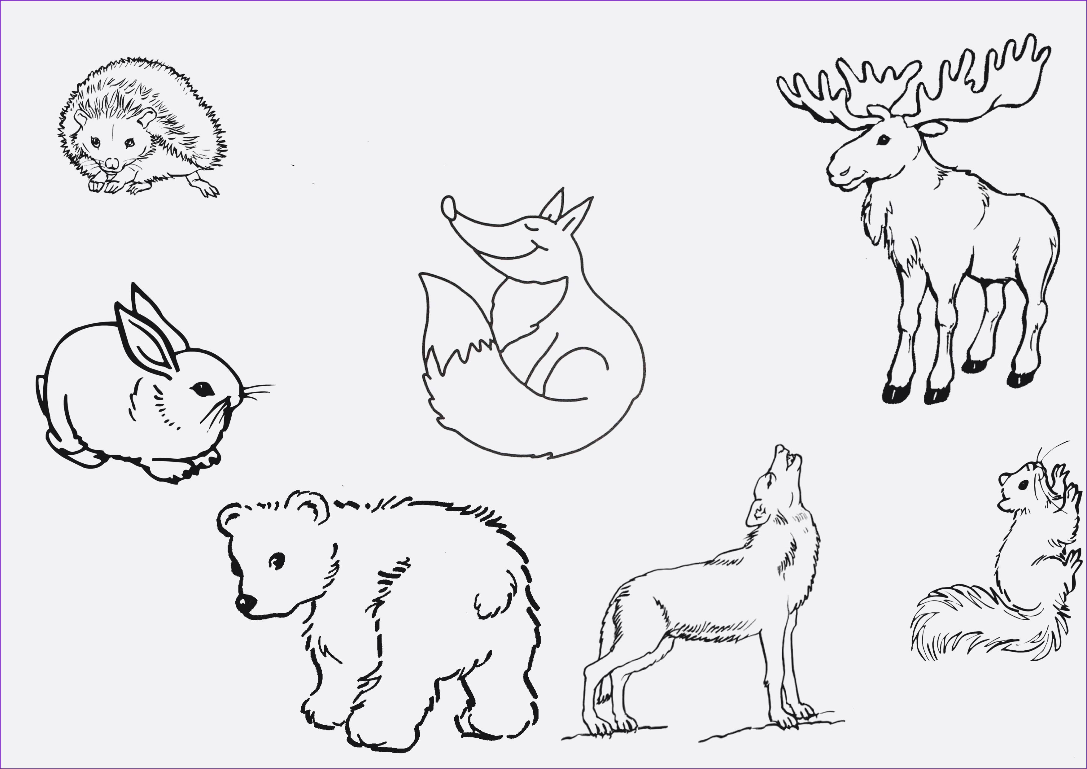 Ausmalbilder Tiere Im Wasser Einzigartig 24 Schön Bilder Zum Ausmalen Tiere – Malvorlagen Ideen Galerie