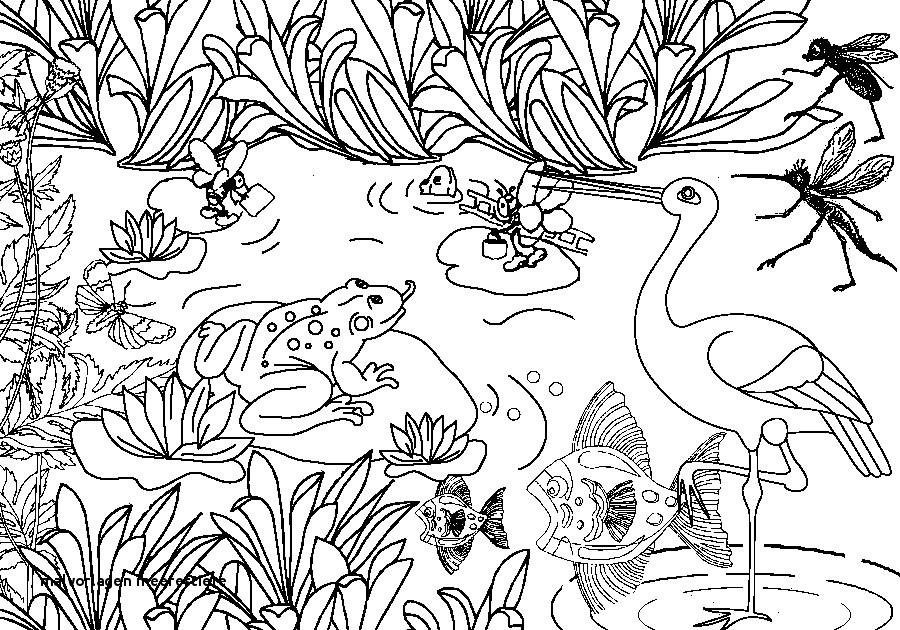 Ausmalbilder Tiere Im Wasser Einzigartig Malvorlagen Meerestiere Ausmalbilder Tiere 12 Zeichnen Pinterest Stock