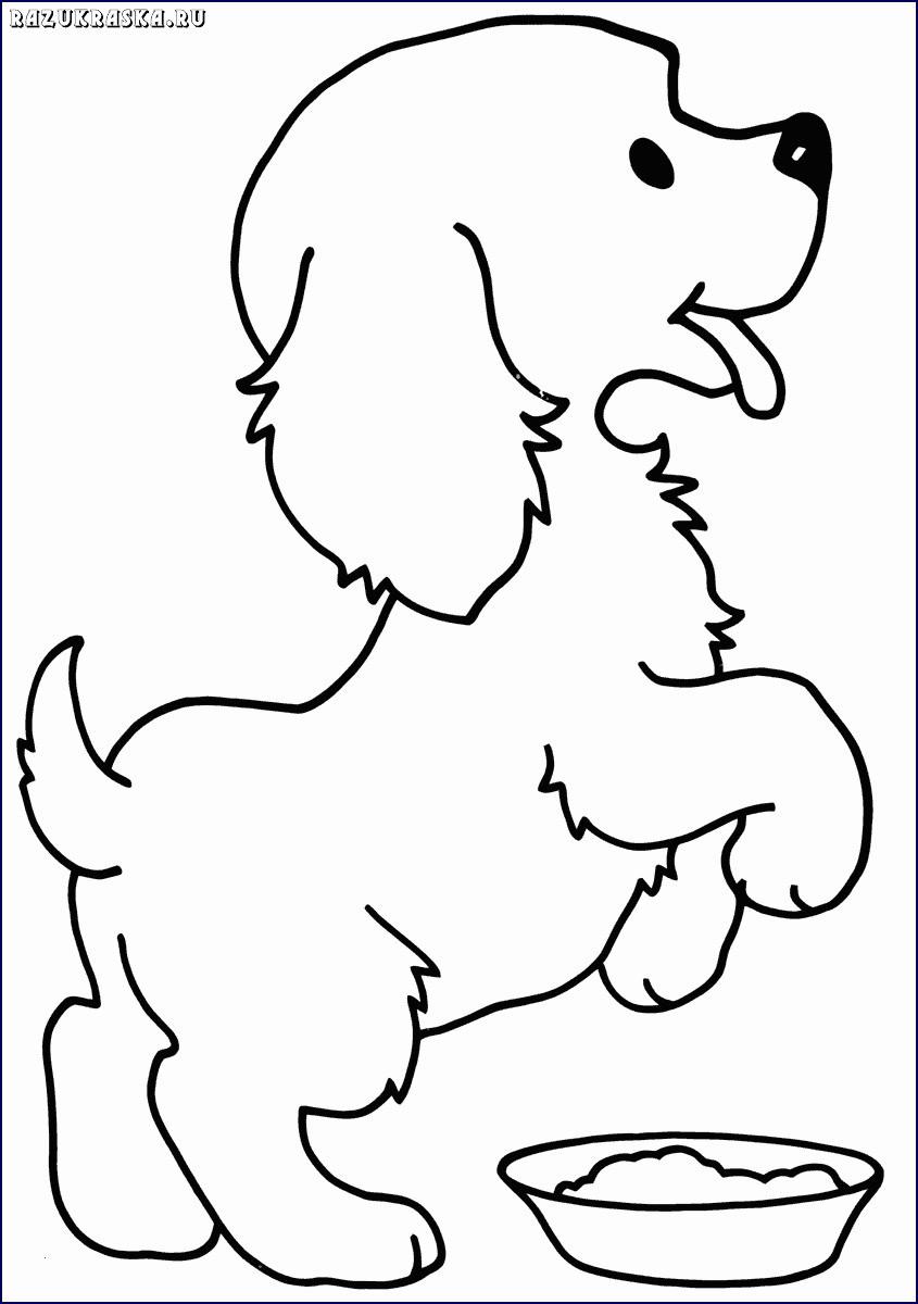 Ausmalbilder Zum Ausdrucken Hunde Einzigartig 46 Neu Bilder Ausmalbilder Hunde Zum Ausdrucken Best Ausmalbilder Stock