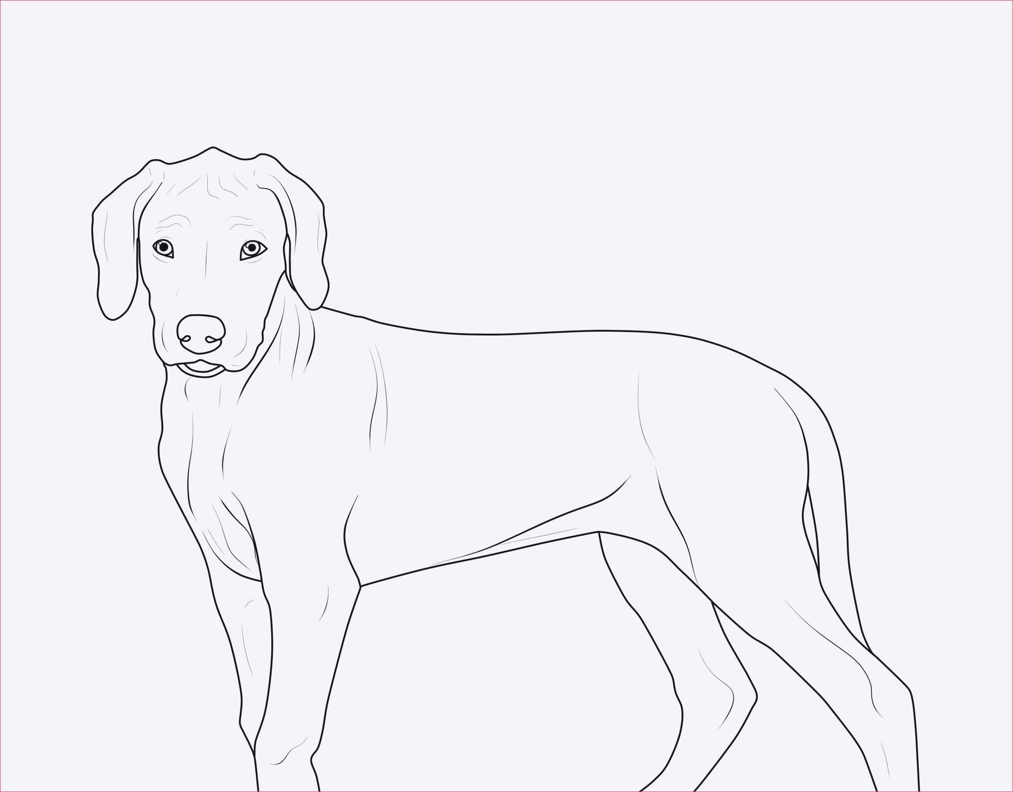 Ausmalbilder Zum Ausdrucken Hunde Einzigartig Malvorlagen Hunde Gratis Sammlung