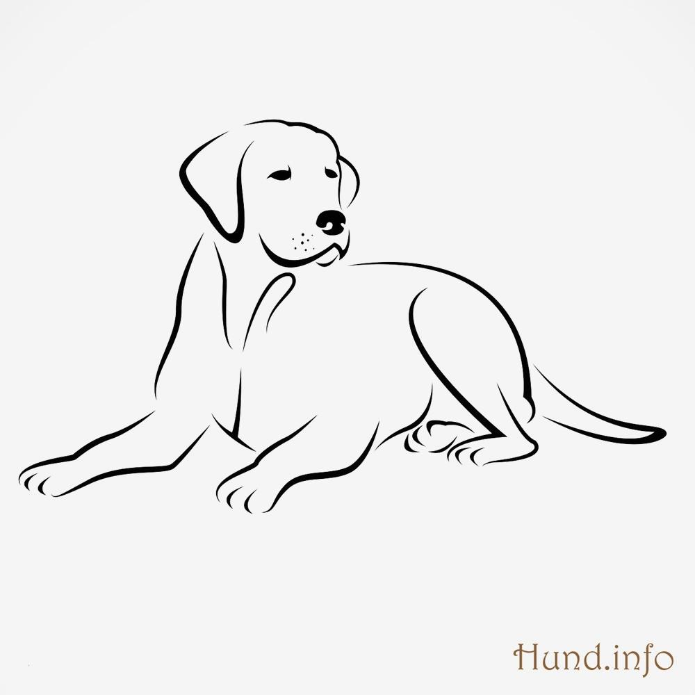 Ausmalbilder Zum Ausdrucken Hunde Frisch Malvorlagen Hunde Kostenlos Ausdrucken Bildergalerie & Bilder Zum Bild