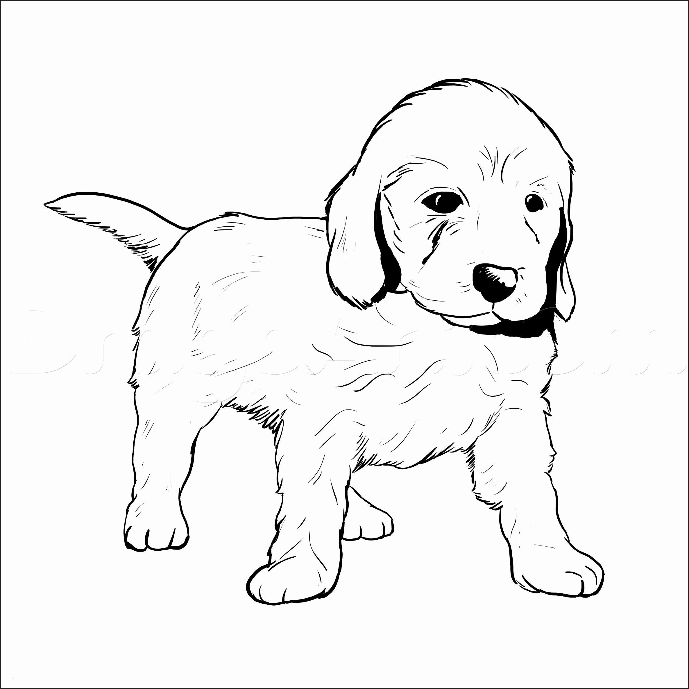 Ausmalbilder Zum Ausdrucken Hunde Inspirierend Ausmalbilder Hunde Golden Retriever Frisch tolle Golden Retriever Das Bild