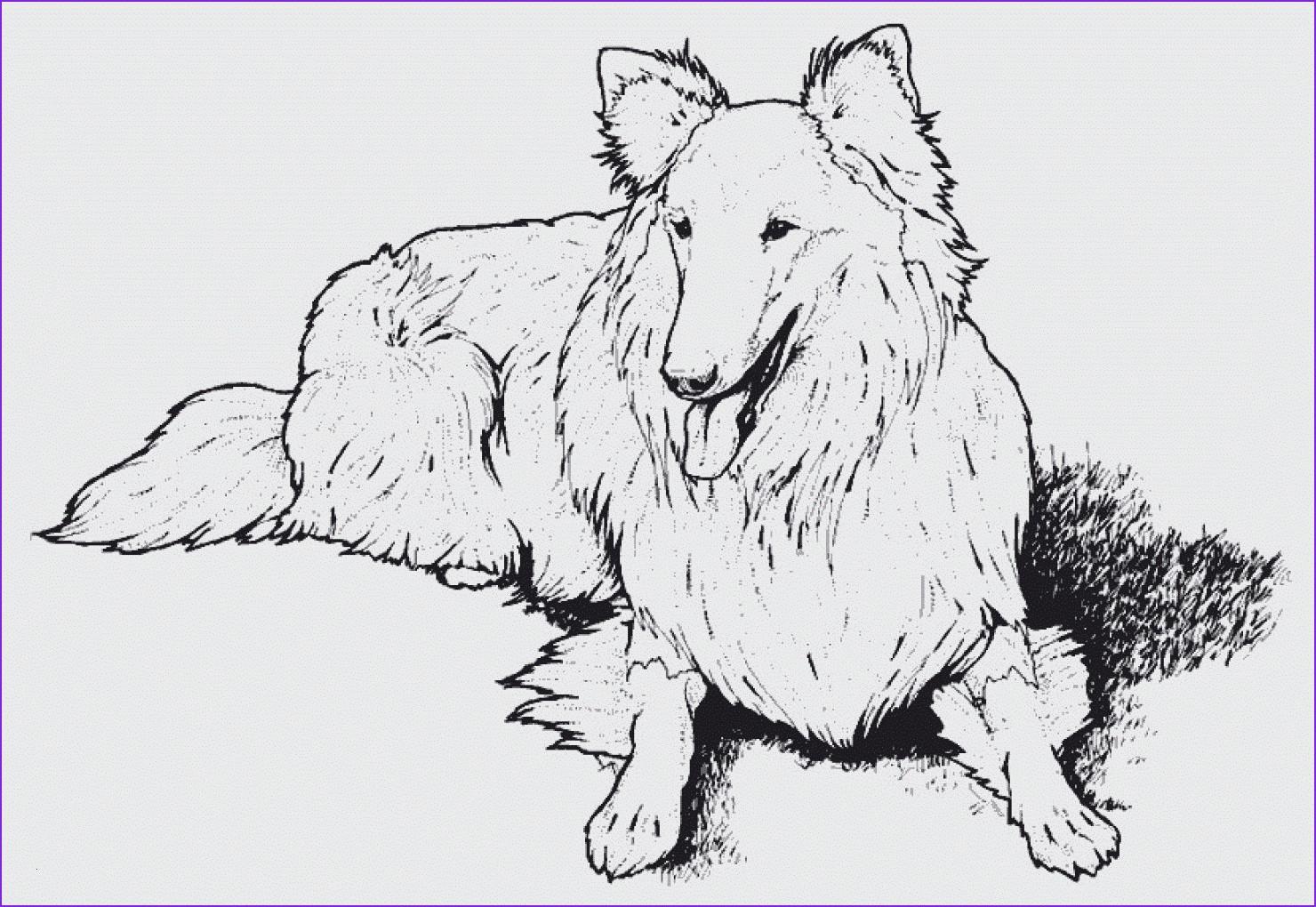 Ausmalbilder Zum Ausdrucken Hunde Inspirierend Bildergalerie & Bilder Zum Ausmalen Malvorlagen Mandala Schön Hunde Das Bild