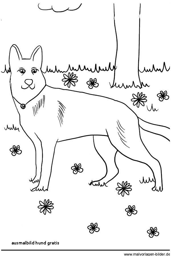 Ausmalbilder Zum Ausdrucken Hunde Neu Ausmalbild Hund Gratis Ausmalbilder Hunde Zum Ausdrucken Kostenlos Galerie