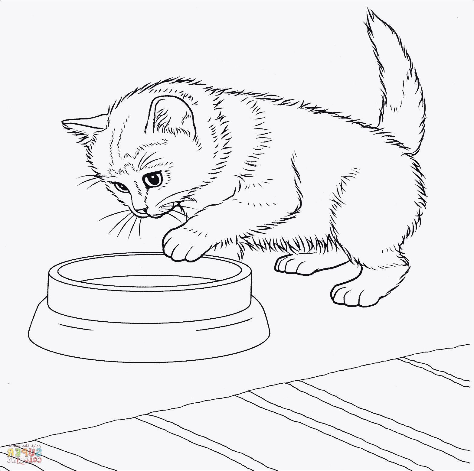 Baby Katzen Ausmalbilder Das Beste Von Ausmalbilder