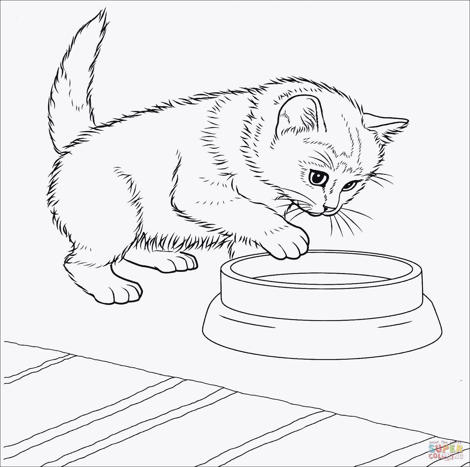Baby Katzen Ausmalbilder Genial Ausmalbilder Kostenlos Katzen Luxus Katzen Malvorlagen Bilder