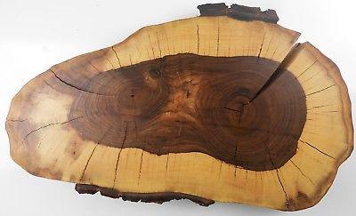 Bäume Zum Ausmalen Genial Restposten Holzscheiben Fotos