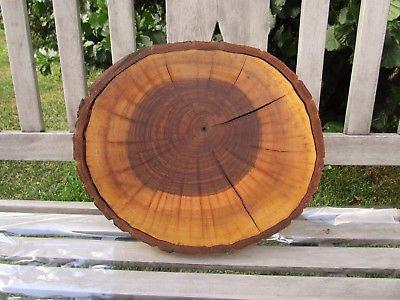 Bäume Zum Ausmalen Neu Restposten Holzscheiben Bild