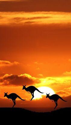 Böse Monster Ausmalbilder Neu 58 Besten Australische Tiere Bilder Auf Pinterest In 2018 Bilder