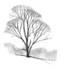 Baum Zeichnung Bleistift Das Beste Von 7 Besten Bäume Erkennen Bilder Auf Pinterest Sammlung