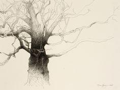 Baum Zeichnung Bleistift Das Beste Von Die 84 Besten Bilder Von Trees In 2018 Galerie