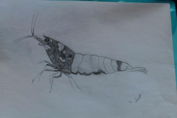 Baum Zeichnung Bleistift Das Beste Von Schmetterling Zeichnen Bleistift Schön 10 Best Zeichnungen Das Bild