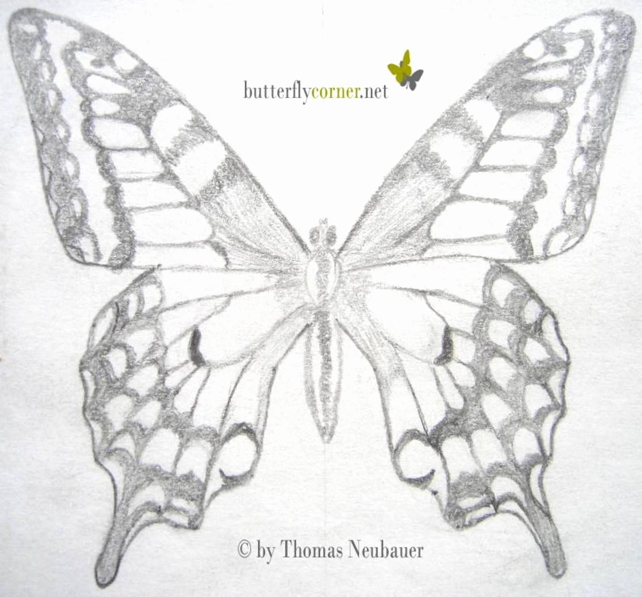 Baum Zeichnung Bleistift Einzigartig Schmetterling Zeichnen Bleistift Best 10 Best Zeichnungen Sammlung