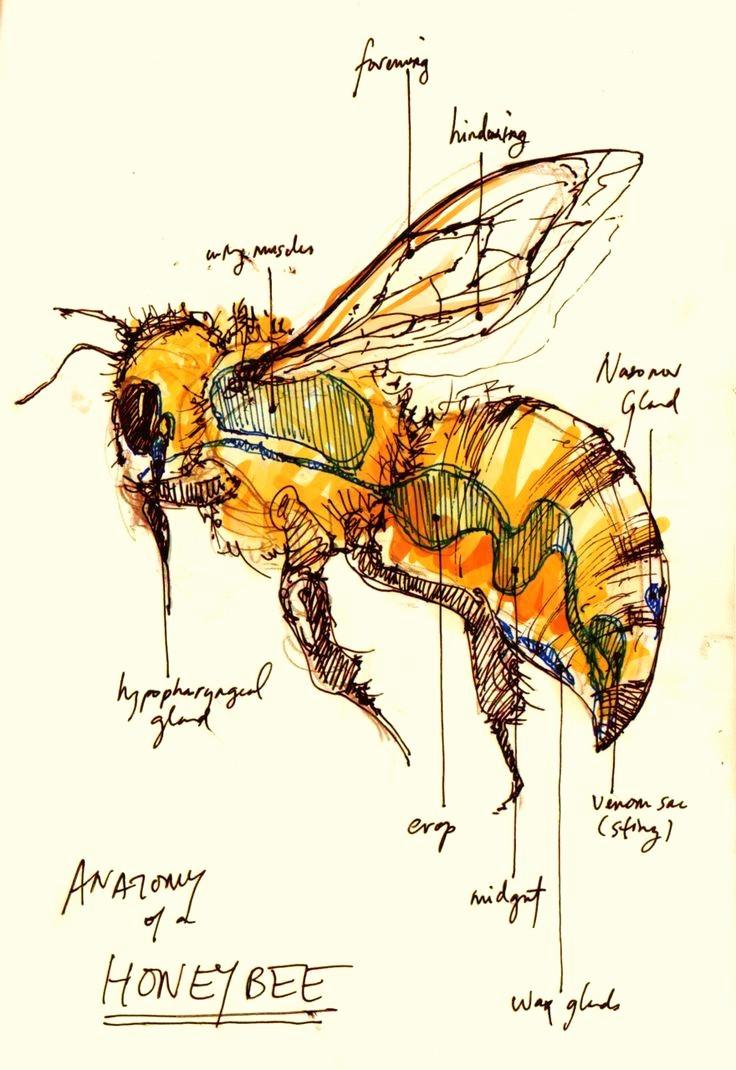 Baum Zeichnung Bleistift Einzigartig Schmetterling Zeichnen Bleistift Neu S S Media Cache Ak0 Pinimg 736x Stock