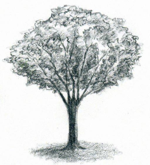 Baum Zeichnung Bleistift Frisch Schmetterling Zeichnen Bleistift Designs 325 Best Zeichnen Das Bild