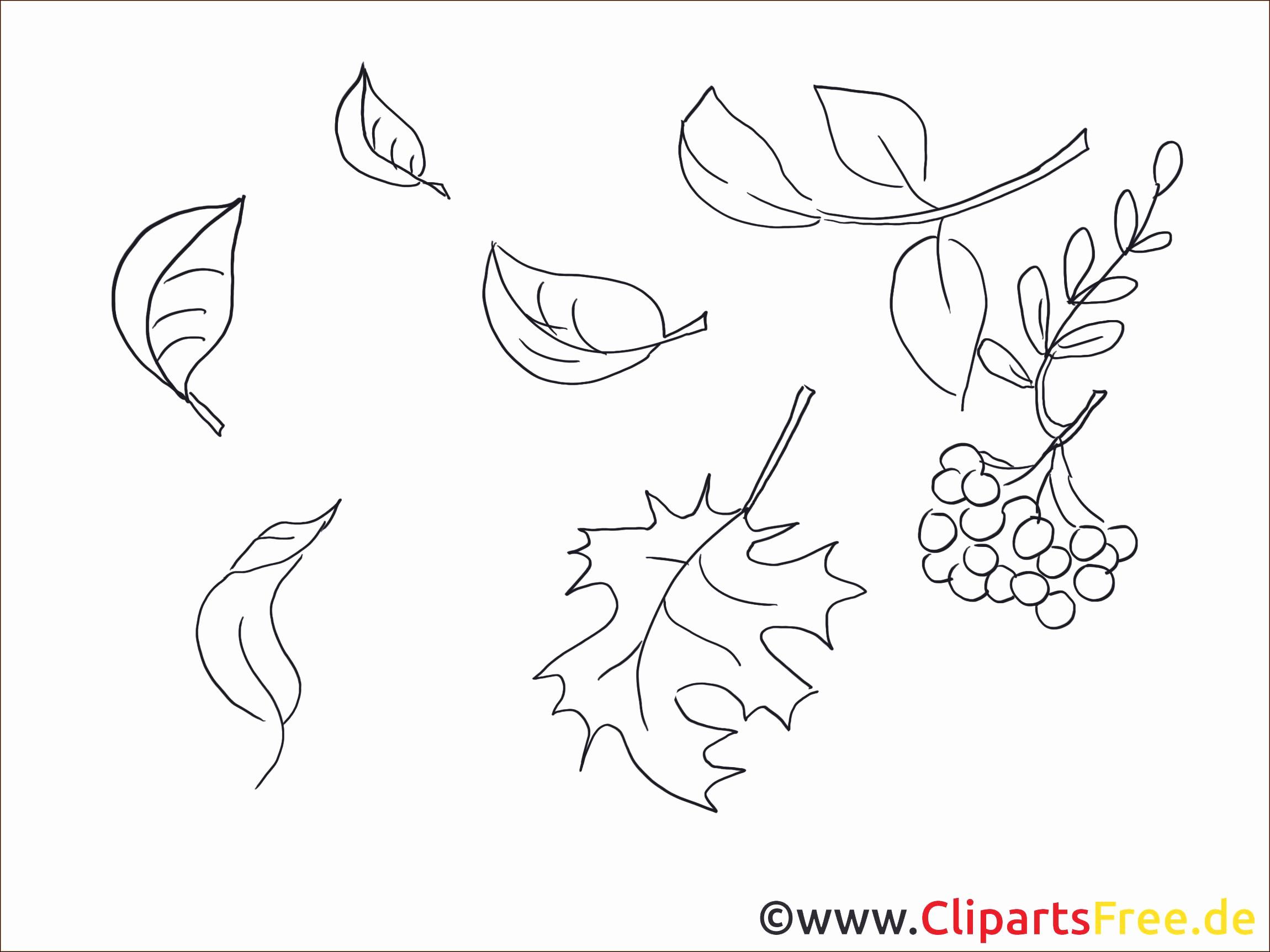 Baum Zeichnung Bleistift Frisch Schmetterling Zeichnen Bleistift Konzepte 325 Best Zeichnen Das Bild