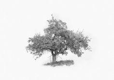 Baum Zeichnung Bleistift Genial 21 Besten Drawing Zeichnen Landschaften Bilder Auf Pinterest Sammlung