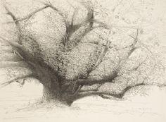 Baum Zeichnung Bleistift Genial Die 84 Besten Bilder Von Trees In 2018 Bilder