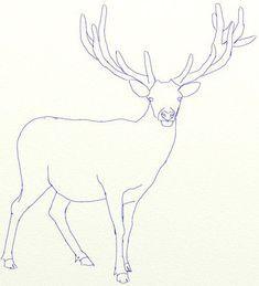 Baum Zeichnung Bleistift Genial Die 99 Besten Bilder Von Rentier Zeichnen In 2018 Stock