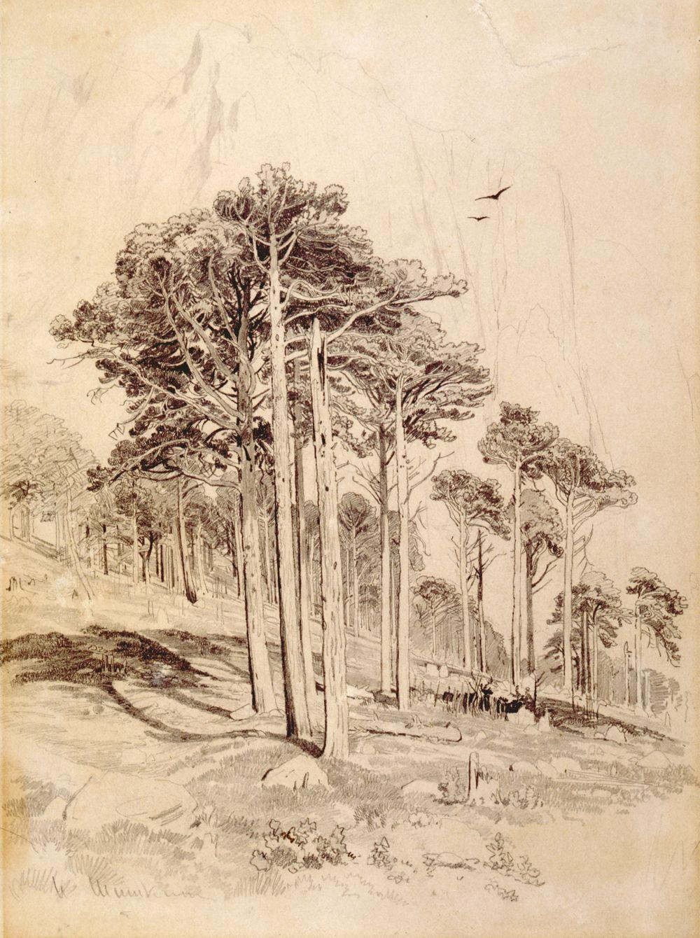 Baum Zeichnung Bleistift Inspirierend Ivan Shishkin Nature Pinterest Fotografieren