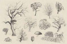 Baum Zeichnung Bleistift Neu 992 Besten Zeichnen Bilder Auf Pinterest In 2018 Sammlung