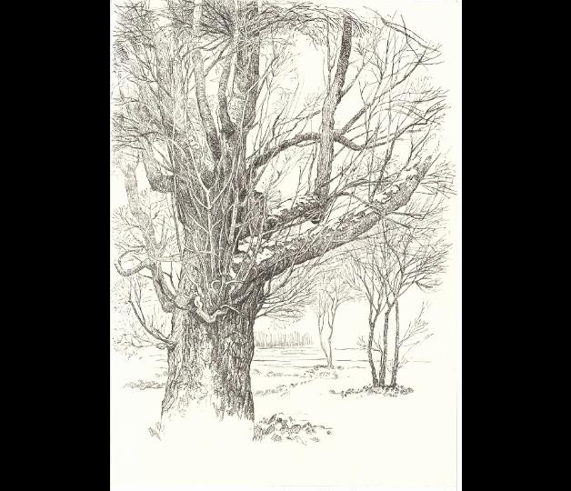 Baum Zeichnung Bleistift Neu Schmetterling Zeichnen Bleistift Designs 325 Best Zeichnen Stock
