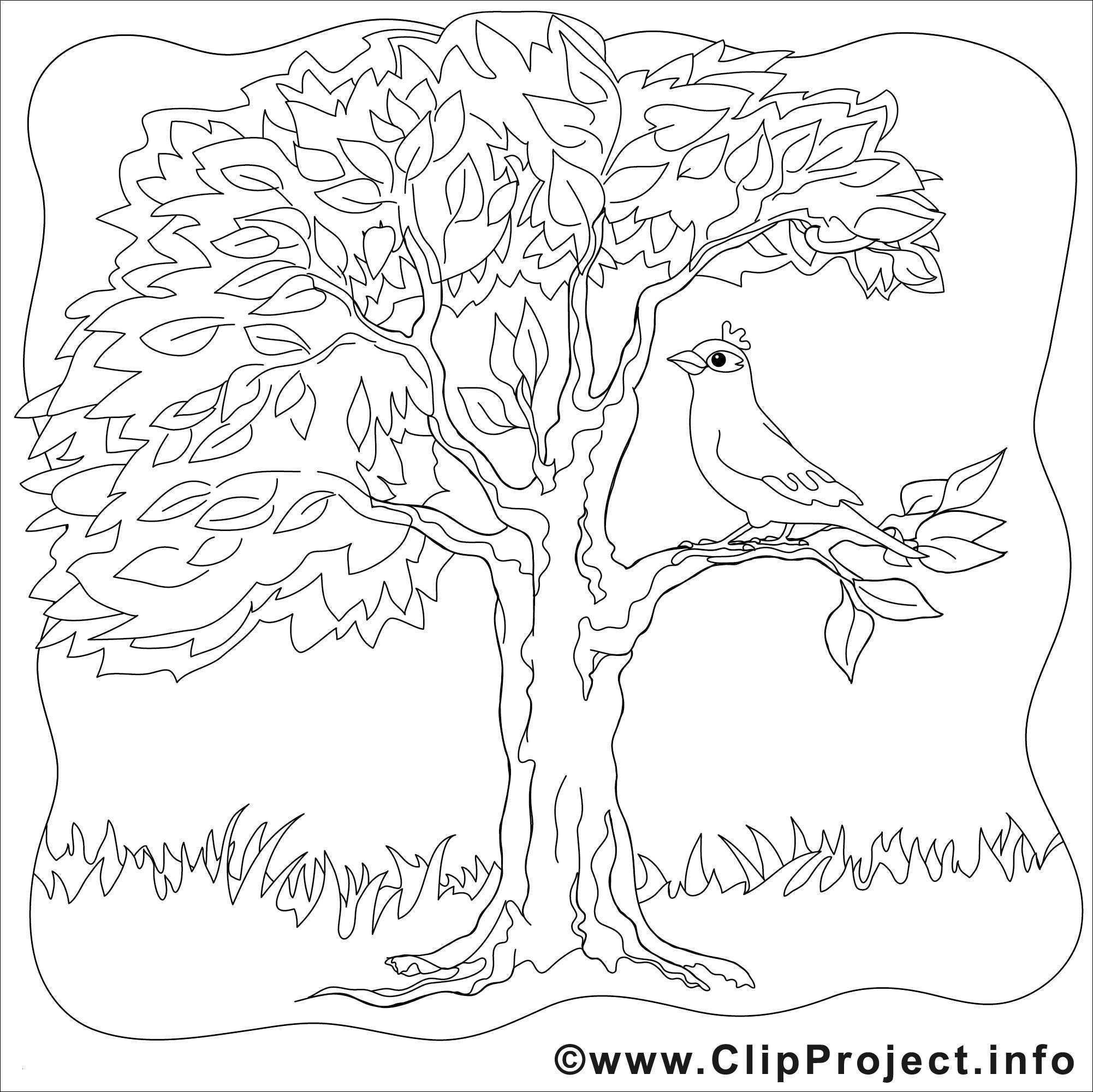 Baum Zeichnung Bleistift Neu Wald Gezeichnet Bleistift Fotos 40 Ausmalbilder Herbst Baum Galerie
