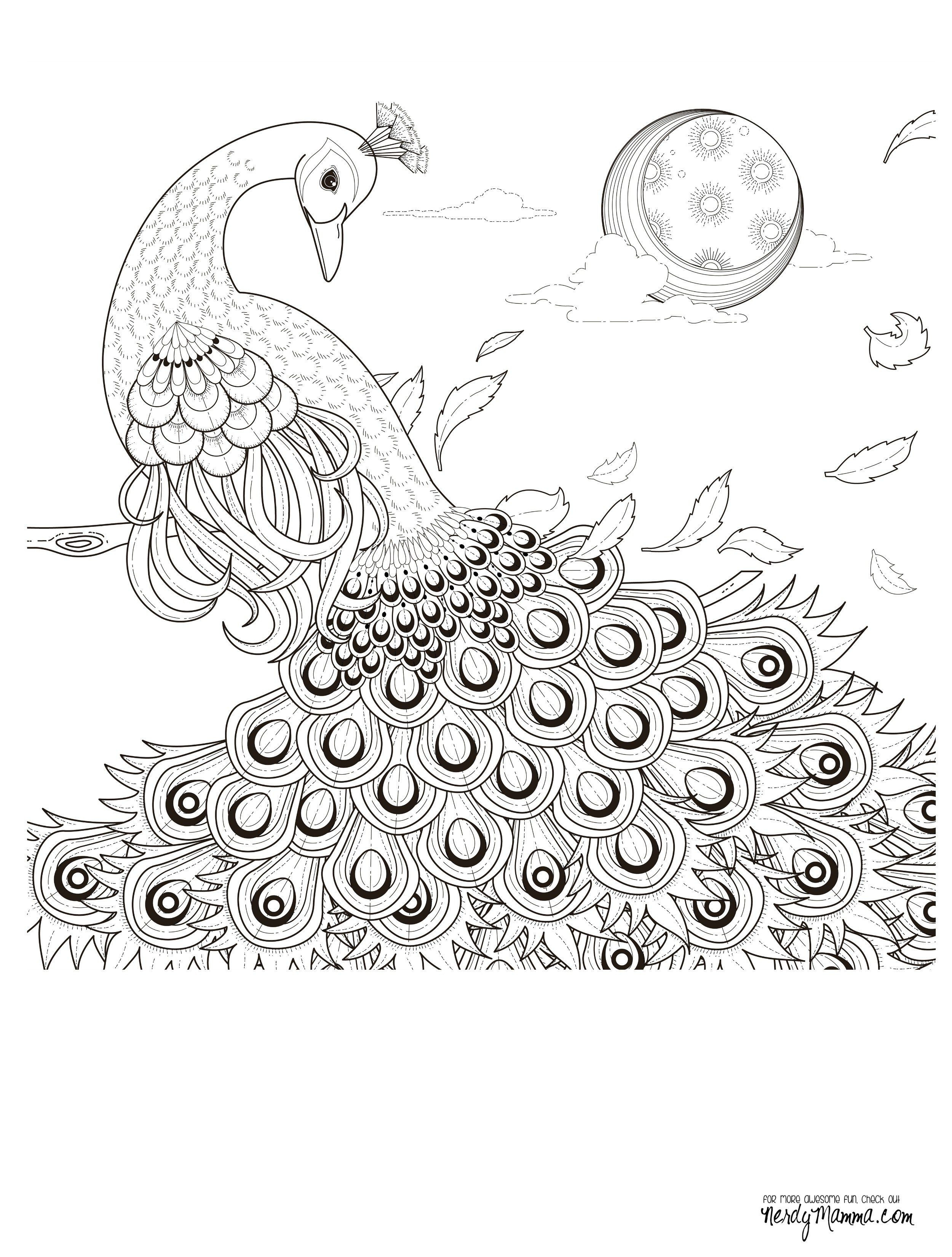 Ben Und Holly Ausmalbilder Neu Peacock Feather Coloring Pages Colouring Adult Detailed Advanced Das Bild