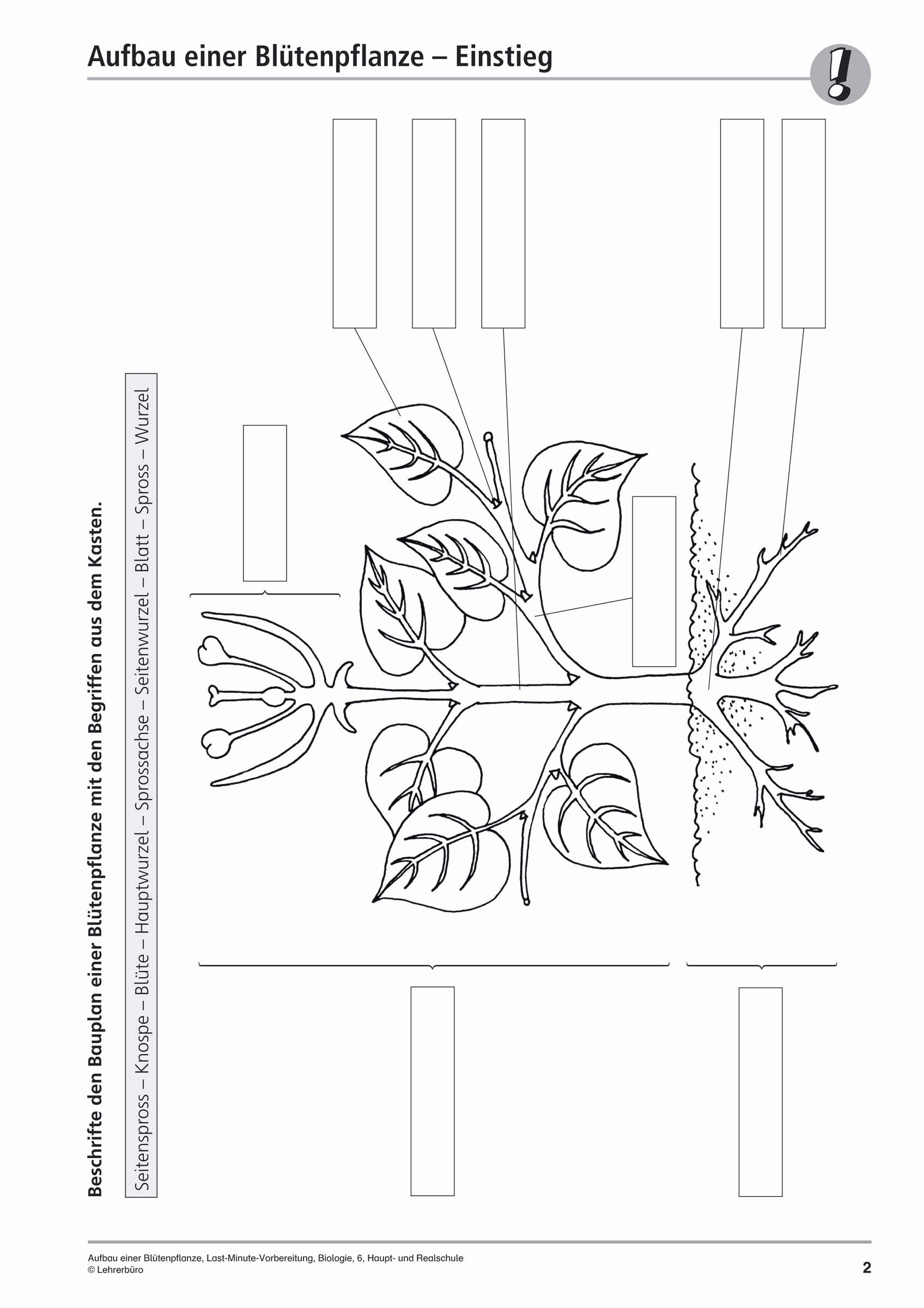 Biologie Deckblatt Zum Ausmalen Das Beste Von 59 Kollektionen Von Designs Von Deckblätter Vorlagen Schule Galerie