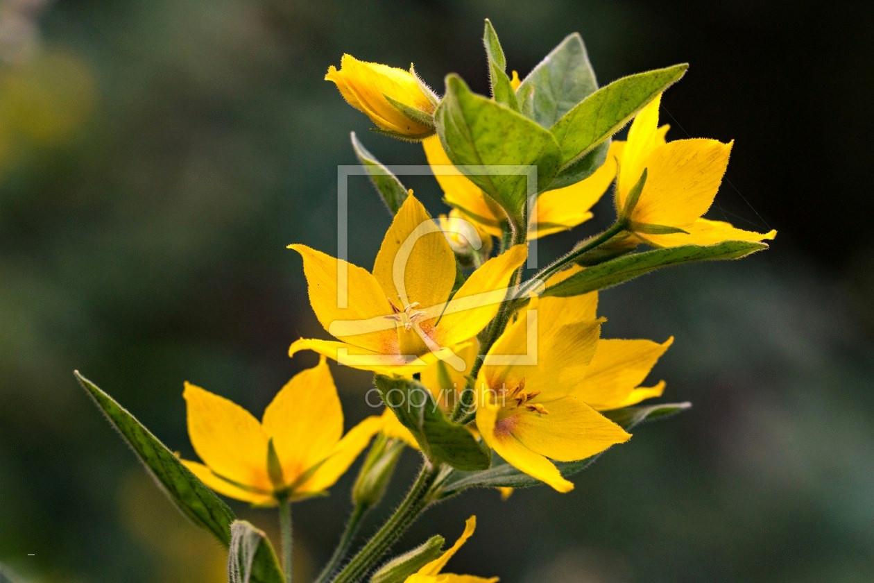 Blumenranken Zum Ausdrucken Das Beste Von Blumen Bilder Zum Ausdrucken Luxus Karte Blumen Neuestes S S Media Das Bild