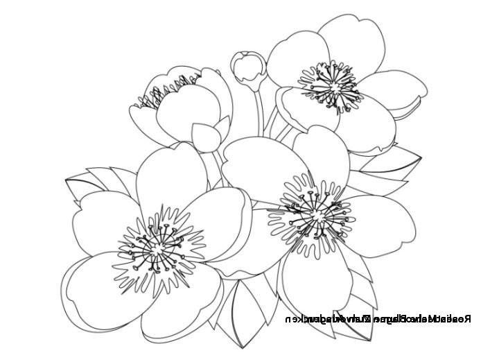 Blumenranken Zum Ausdrucken Frisch 28 Elegant Blumen Zum Ausdrucken – Malvorlagen Ideen Stock