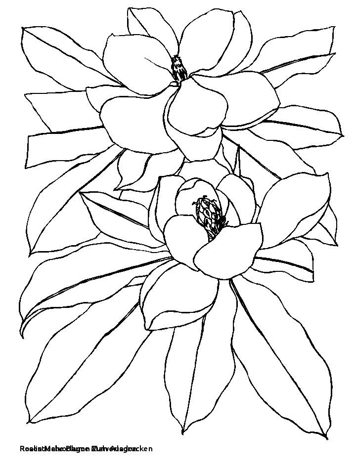 Blumenranken Zum Ausdrucken Inspirierend Rosen Malvorlagen Zum Ausdrucken Blumenmuster Malen Kostenlose Fotografieren
