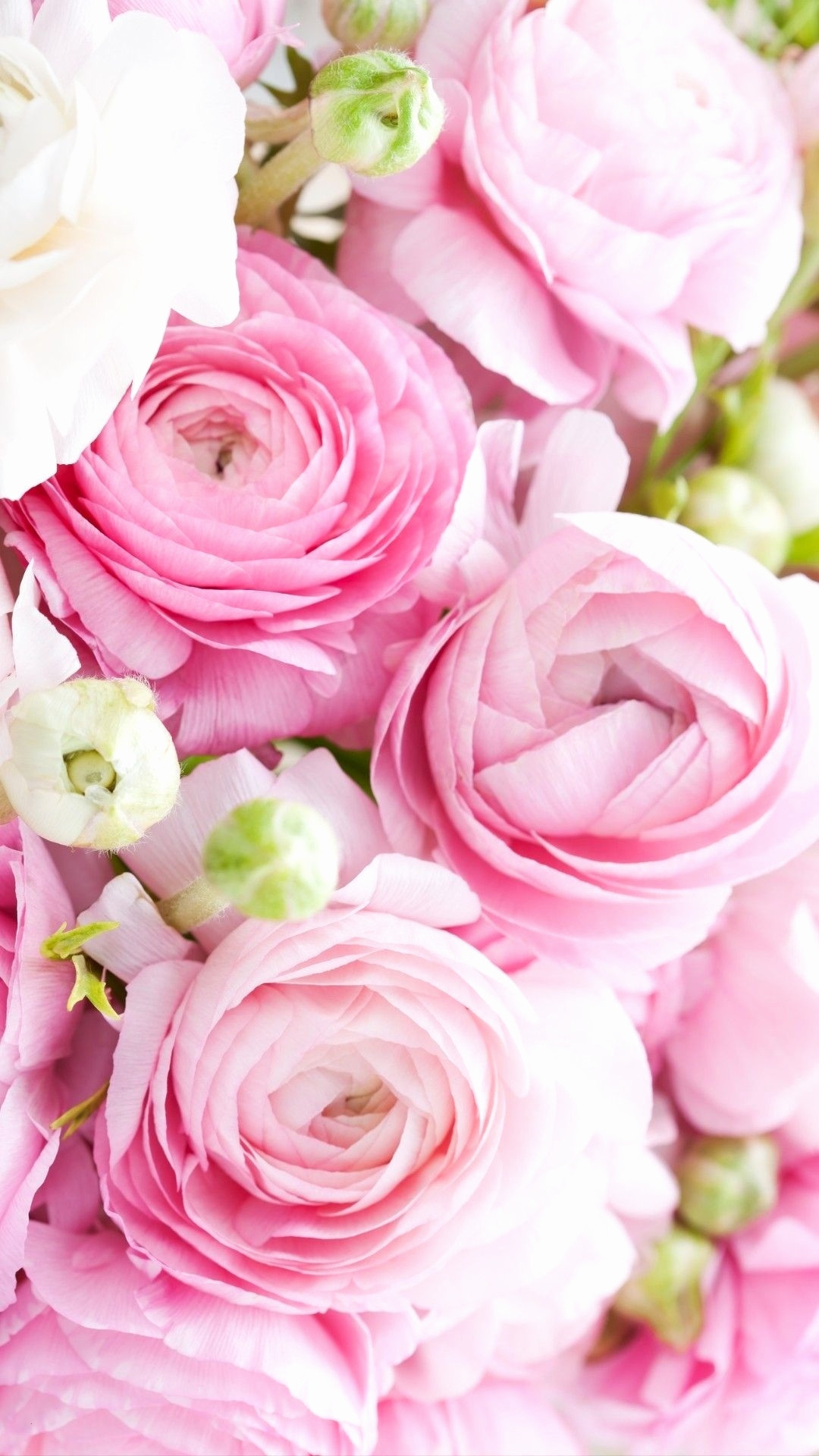Blumenranken Zum Ausdrucken Neu Blumen Bilder Zum Ausdrucken Schön Geburtstagskarten Mit Blumen Bild
