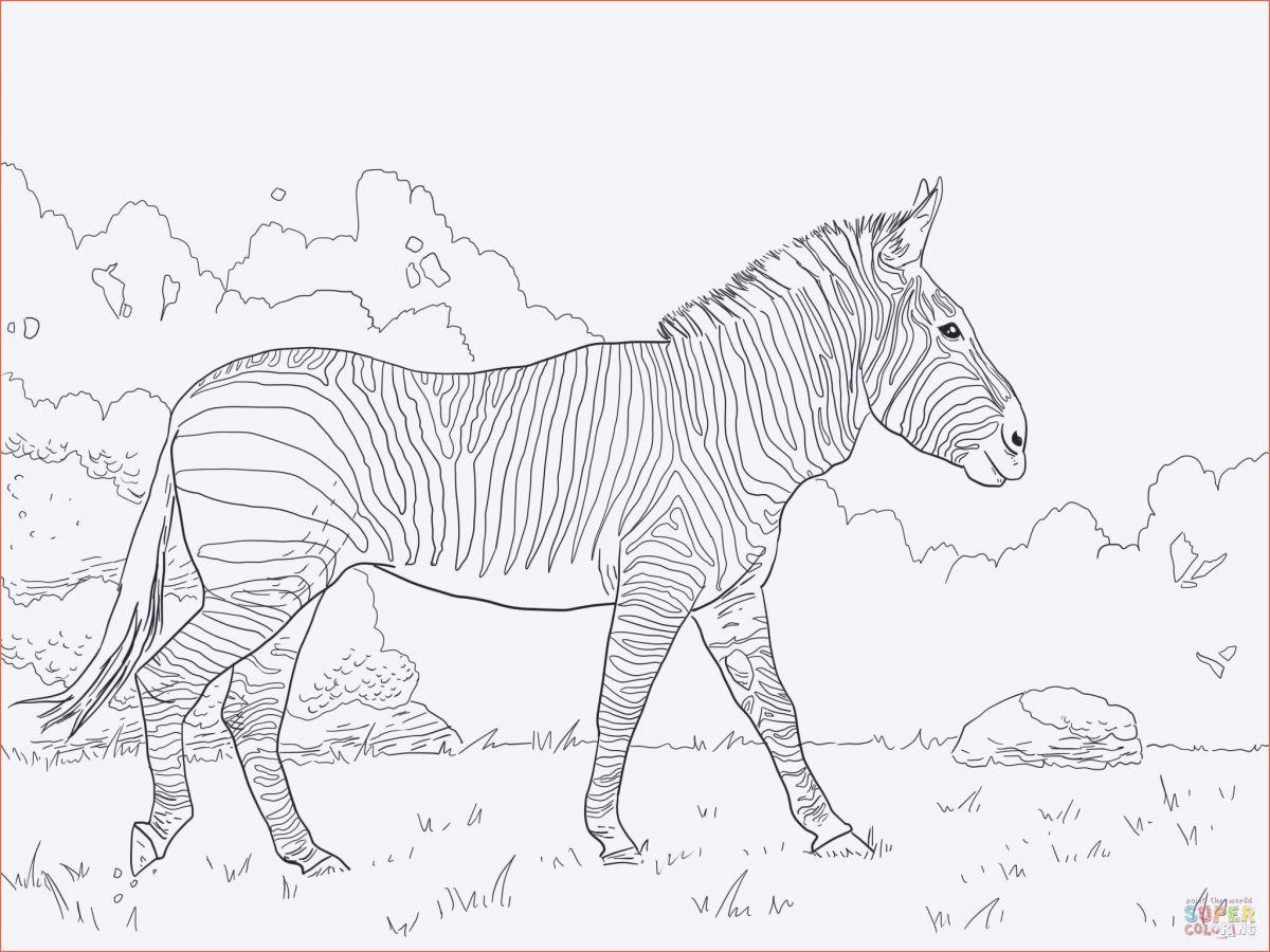 Clash Royale Ausmalbilder Frisch Pandabär Ausmalbilder New Malvorlagen Pferde A4 Beste Malvorlage Stock