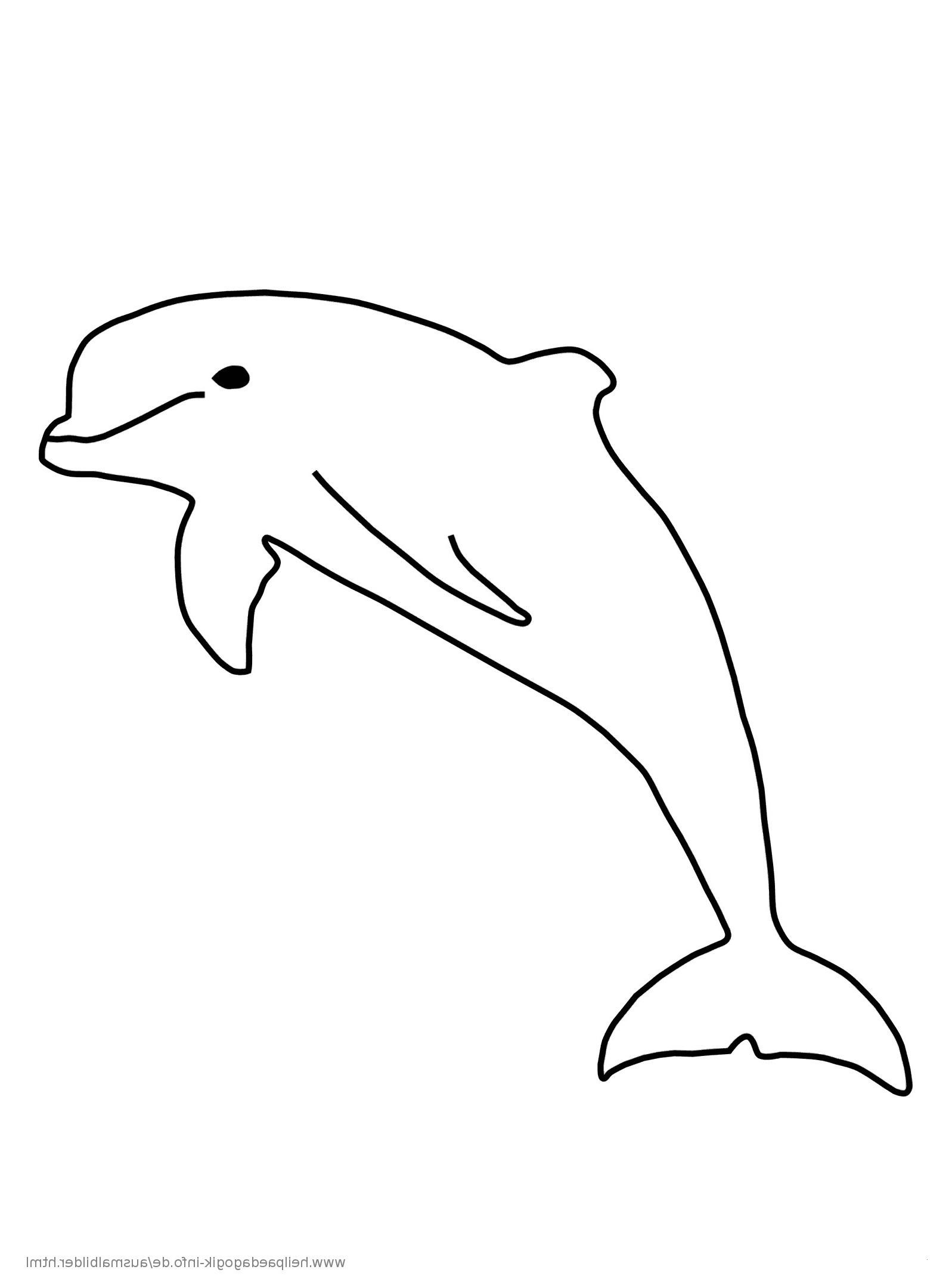 Delphin Zum Ausmalen Einzigartig 34 Einzigartig Delfin Ausmalbilder – Große Coloring Page Sammlung Fotos