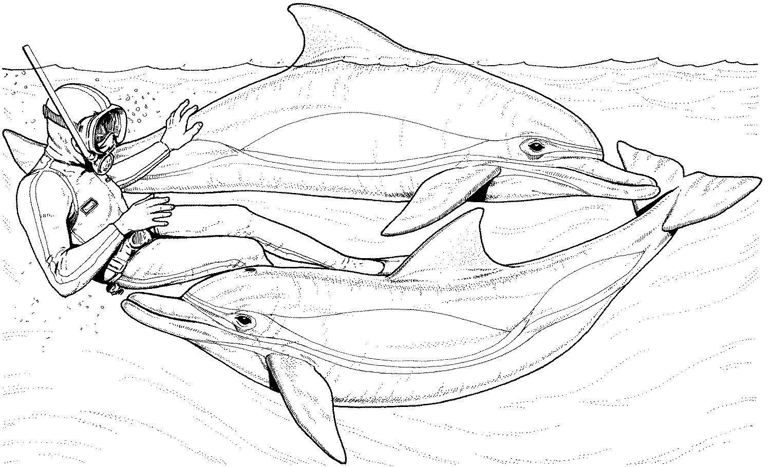 Delphin Zum Ausmalen Einzigartig 47 Elegant Delfin Ausmalbilder Zum Ausdrucken Beste Malvorlage Bild
