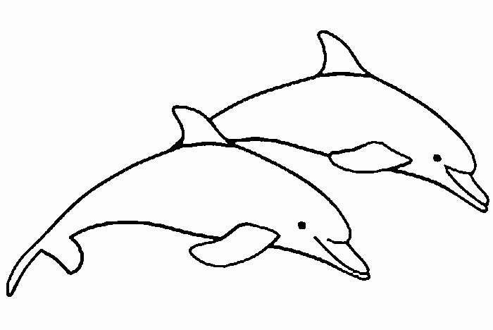 Delphin Zum Ausmalen Einzigartig Ausmalbilder Delfine Zum Ausdrucken Sammlungen Malvorlagen Delphin Das Bild