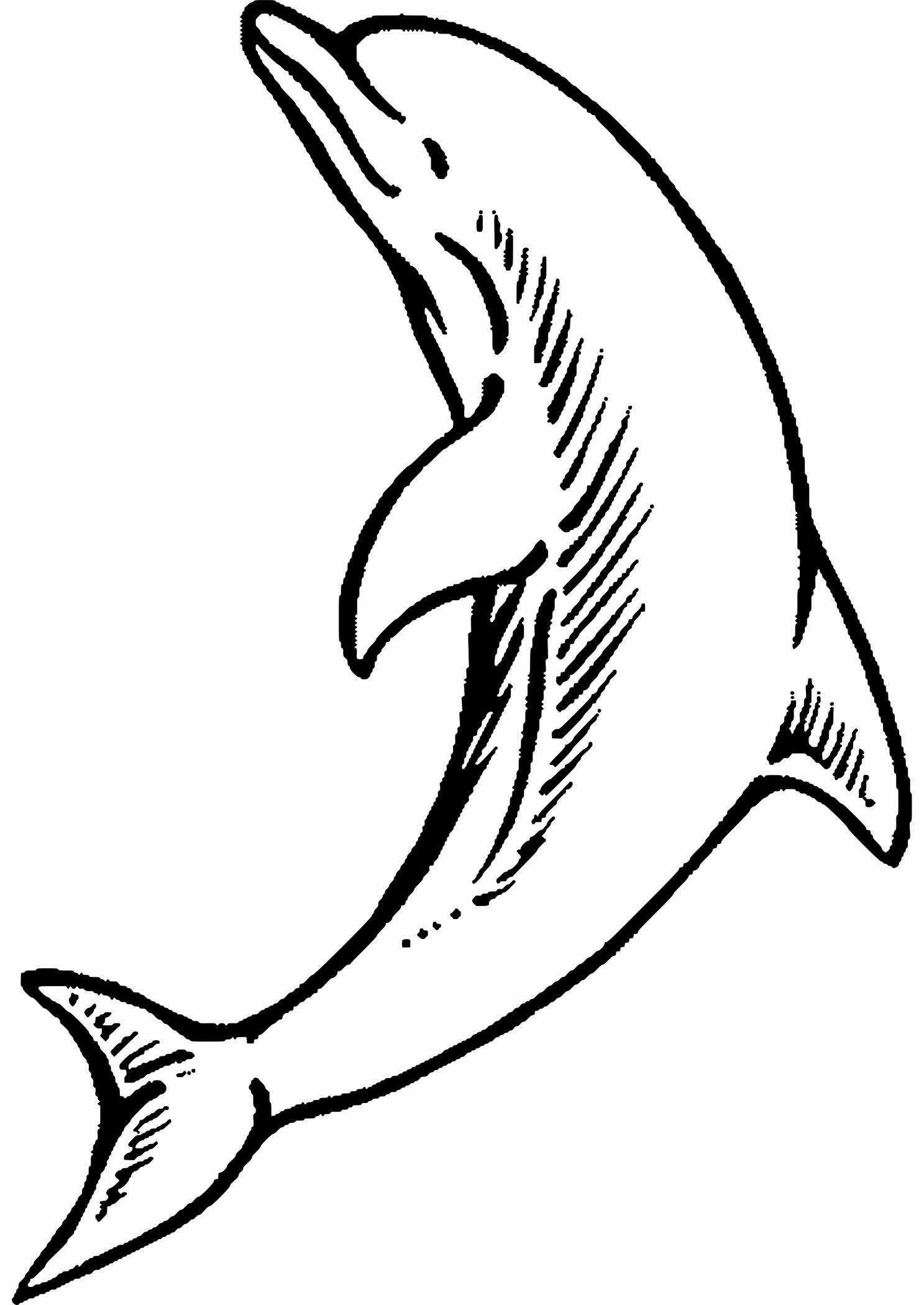 Delphin Zum Ausmalen Frisch Ausmalbilder Delfine Zum Ausdrucken Sammlungen Malvorlagen Delphin Stock