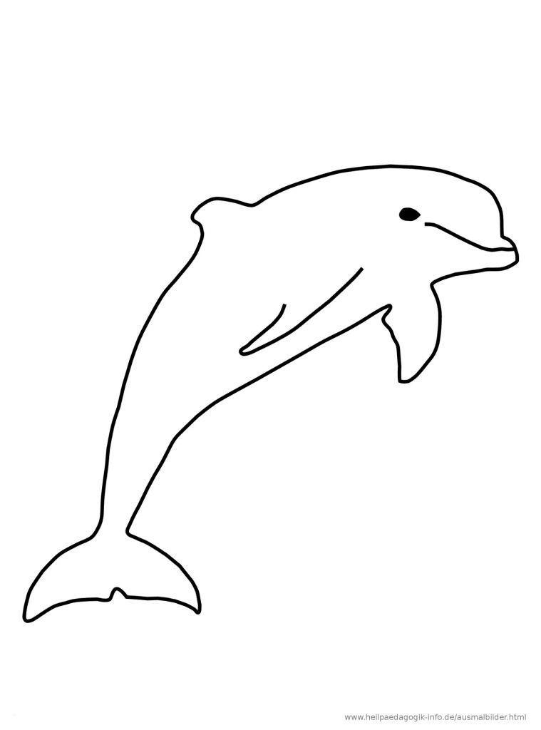 Delphin Zum Ausmalen Einzigartig Delfin Ausmalbilder Luxus 32